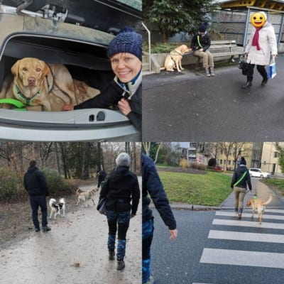 Hundeführerschein 2